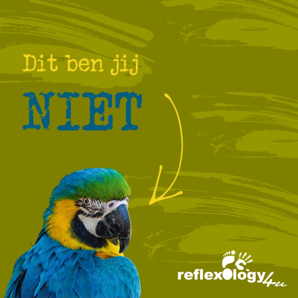 Jij bent geen papegaai, ook niet bij een examenvraag!